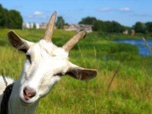 Фото: У День рятівника в Полтаві пожежники врятували козу