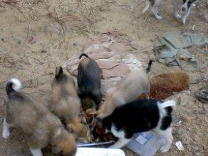 Фото: У Полтаві за пожертвувані кошти вже почали стерилізувати тварин