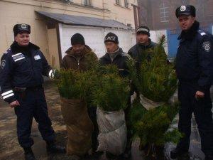 У Полтаві міліція затримала продавців нелегальних ялинок
