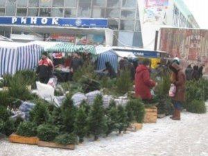 Фото: Придбати ялинку 31 грудня для полтавців не є проблемою