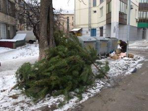 Фото: Влада Полтави просить не псувати вигляд міста викинутими ялинками
