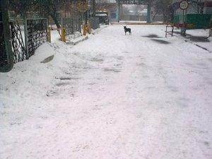 Полтавські собаки пильно стережуть територію підприємств