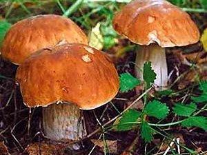 Фото: У Полтаві отруєння грибами виявилося кисневим голодом через витік газу