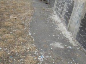 Фото: У Полтаві з'явилось сигаретне поле