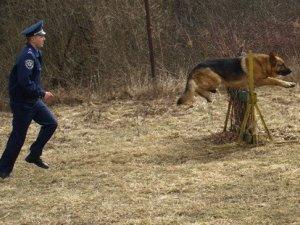 Фото: У Полтаві до Євро-2012 службових собак спеціально тренують шукати наркотики та терористів