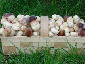 Фото: У Полтаві заборонили продавати дикорослі гриби