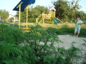 Фото: Мешканці полтавського приміського села «загартовують» своїх дітей отруйною рослиною