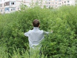 Фото: Полтавський «Еліта-Центр» став майданчиком для дитячих розваг
