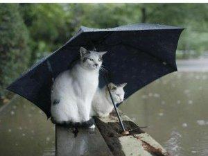 Фото: На неділю готуйте парасольки