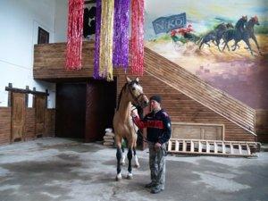 Фото: На Полтавщині заради порятунку коней продали зоопарк
