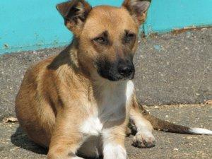 Фото: У Полтаві безпритульні тварини шукають господарів