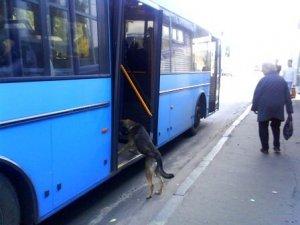 Фото: У Полтаві пес хотів проїхатись в громадському транспорті