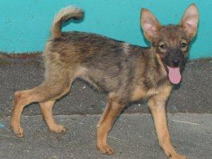 Фото: У Полтаві безпритульні тварини шукають господарів, у тому числі пес-інвалід, що постраждав від потяга