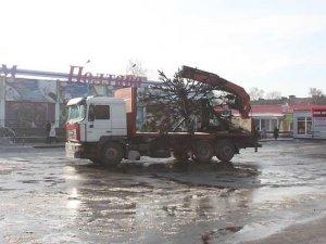 Фото: У Полтаві урочисто спалили новорічну ялинку: фото та подробиці