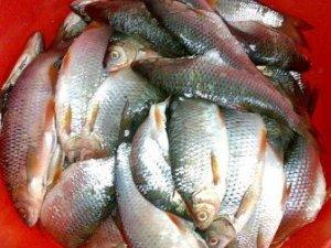 Фото: У Полтаві викрили незаконну торгівлю рибою