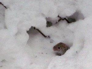 Фото: Сьогодні передбачити подальшу погоду допоможуть миші
