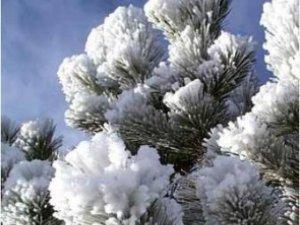 Фото: Якщо сьогодні іній на деревах… – дізнайся, яким буде літо