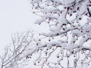 Фото: За народними прикметами, нинішні морози останні