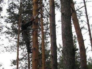 Фото: Під Полтавою безробітний незаконно вирубував ліс