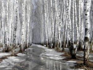 Фото: 1 березня – погоду передбачить грім і вітер