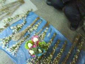 Фото: Тема тижня. У Полтаві продають справжні весняні  квіти