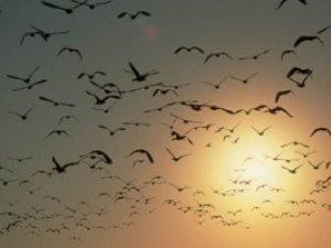 Фото: Побачити сьогодні 40 пташок – до щастя