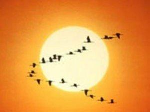 Фото: 9 квітня – завершується приліт ранніх птахів
