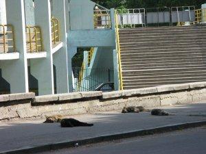 Фото: У Полтаві волонтерів почули – собак менше вбиватимуть і більше годуватимуть