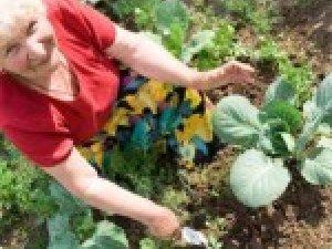 Фото: Городникам сьогодні обов'язково слід садити капусту