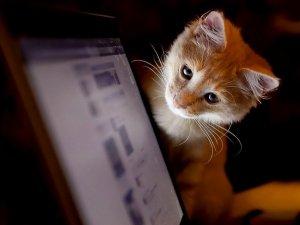Нове опитування: Як часто ви читаєте сайт kolo.poltava.ua?
