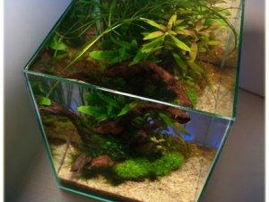 Фото: У Полтаві вперше покажуть кращі акваріуми
