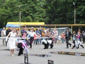 Фото: У Полтаві пройшов собачий парад наречених