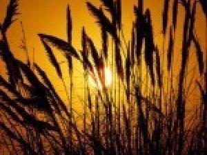 Фото: Якщо день 10 червня тихий, то урожай буде хорошим