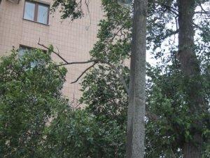 Фото: Як в Полтаві позбавитись аварійного дерева: реальність