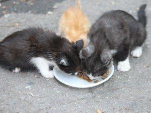 Фото: У Полтаві безкоштовно роздавали собак і котів (фоторепортаж)