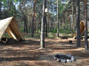 Фото: В яких місцях у лісі полтавцям дозволяють відпочивати