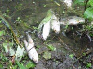 Фото: В Полтаві у річці Ворскла може загинути риба