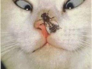Фото: За народними прикметами, від сьогодні починають лютувати комахи