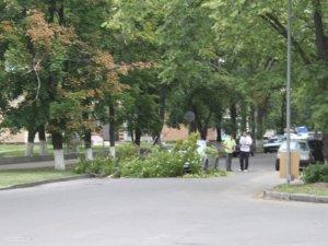 Фото: У Полтаві на автомобіль упало дерево (фото)
