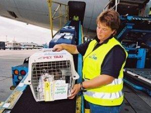 Фото: Особливості перевезення тварин різними видами транспорту