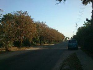 Фото: У Полтаві всихають каштани та дуби