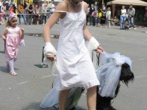 У Полтаві вперше проведуть парад собак
