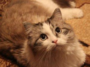 """Фото: Котяча акція від сайту """"Коло"""""""