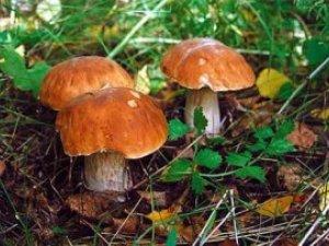 Фото: У Полтаві вже чотири людини отруїлися грибами