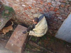 Фото: Під Полтавою врятували собаку, який три доби не давав людям спати