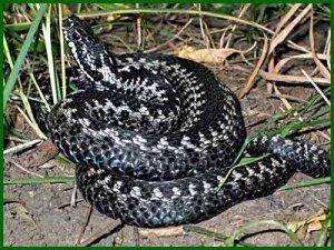 Фото: Полтавку в сусідки вкусила змія