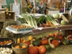 Фото: У Полтаві пройде агровиставка: привезуть органічні продукти