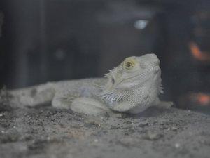 У Полтаві живуть рептилії з усіх куточків світу (фото)
