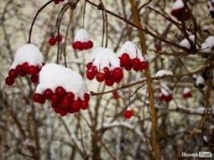 Фото: На Різдво у місті синоптики прогнозують невеликий сніг