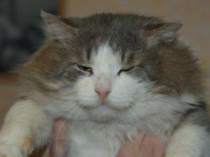 Кіт, який ледь не замерз, кішка, яка втратила око та інші безпритульні тварини шукають господарів (фото)
